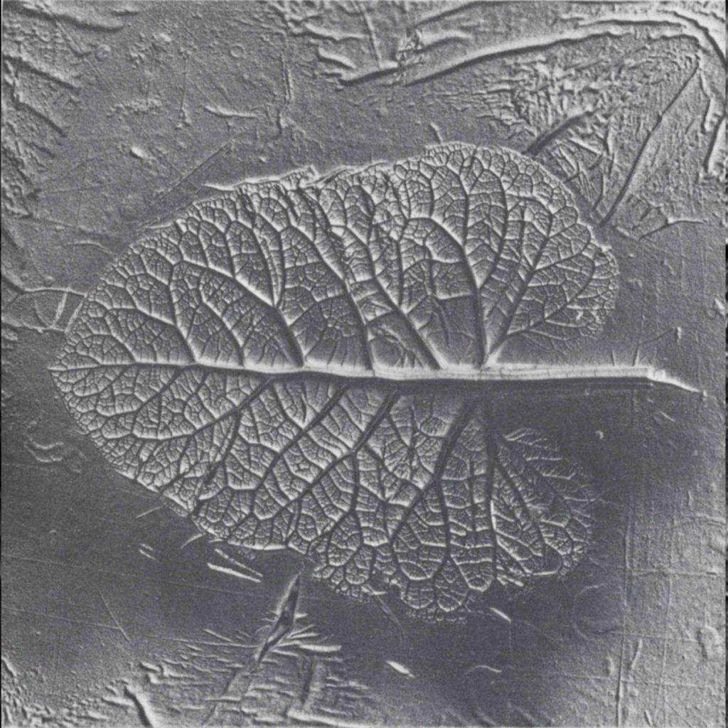 Volker Bussmann Galerie Künstler Preview Pflanzen Blatt